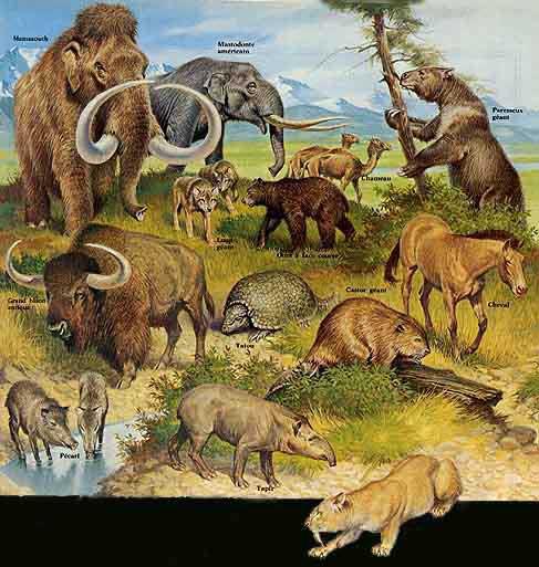 Regne des mammiferes